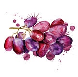 Red grape grunge Royalty Free Stock Images