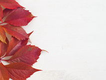 Red grape leaf on the left of white wooden background. Copy space for your text Royalty Free Stock Photography