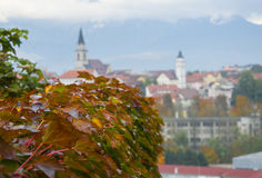Red grape leaves with panorama view of Kranj, Slovenia. On background at autumn day royalty free stock photography