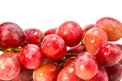 Red grape with water drops Stock Image