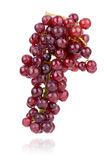 Red grape  on white Royalty Free Stock Photo