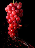 RED GRAPE WINE Stock Image