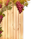 Red grape at wooden fence vector illustration