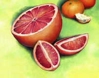 Red grapefruit, painted in oil on canvas. Royalty Free Stock Photos