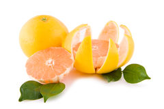 Red grapefruits with leafs Stock Photos