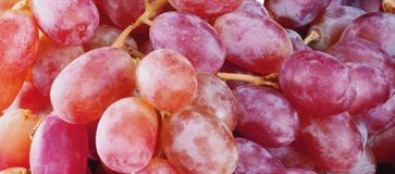 Red grapes royalty free stock images