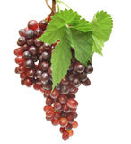 Red grapes. And leaf isolated on white background Stock Photography