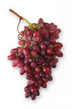 Red Grapes. Bunch of red grapes isolated Royalty Free Stock Image