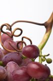 Red Grapes. Bunch of red grapes with white background Stock Photos