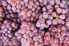 Red Grapes. Fresh red grapes just picked from a vineyard in Yunnan province in southern China Royalty Free Stock Photography