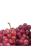 Red grapes Stock Image
