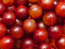 Free Red Grapes Royalty Free Stock Photography - 8536187