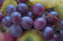Red grapes, apples and leafes. Autumn still life, red grapes, apples and leafes Stock Images