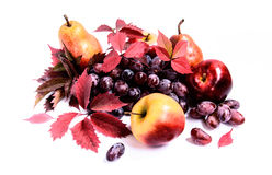 Red grapes with autumn leaves, apples and pears Royalty Free Stock Photo