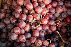 Red grapes background, dark grapes . Stock Photography