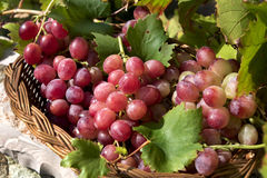 Red grapes in basket, Royalty Free Stock Image