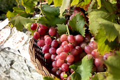 Red grapes in basket, Stock Photo