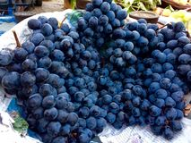 Black Grapes. The Beautiful look of Black grapes the testing naturalist Stock Photos