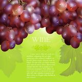 Red grapes bunch with dew drops. Vector bunch of the fresh red grapes with the green leaves and the dew droplets on a green background with glow flare, grape Royalty Free Stock Image