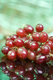 Red Grapes, close up Royalty Free Stock Photo