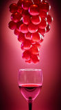 Ripe red grapes with glass of wine. On red background. Ripe red grapes with glass of wine on red background Royalty Free Stock Image
