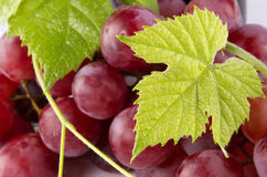 Red grapes with green leaves Royalty Free Stock Images