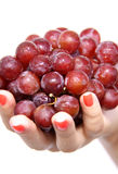 Red Grapes in hand Stock Image