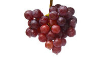 Red grapes hanging isolated Stock Images