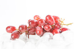 Red grapes on the ice Stock Image