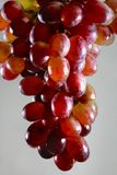 Red grapes isolated on gray background Royalty Free Stock Photo