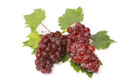 Red grapes with leaves Royalty Free Stock Photos