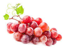 Red Grapes with leaves Royalty Free Stock Photography