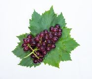 Red grapes and leaves with water drops.  royalty free stock images
