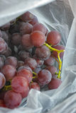 Red grapes in a plastic bag Stock Photos