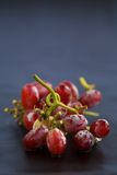 Red Grapes on the vine. Red Grapes frozen on the vine Stock Photography