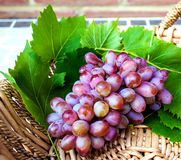 Red grapes on vine leaves. A bunch of fresh red grapes on vine leaves in a decorated raffia basket Stock Images