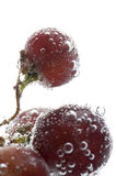 Red grapes in water macro Royalty Free Stock Photography