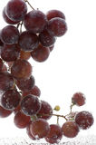 Red grapes in water on white Royalty Free Stock Photo