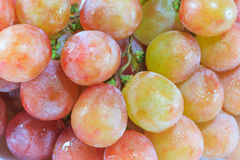 Red Grapes. In White Background Royalty Free Stock Image