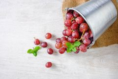 Red grapes on a white background stock photos