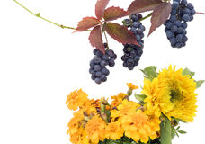 Red grapes and yellow flowers Royalty Free Stock Photography