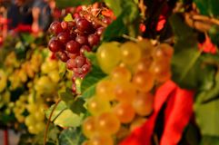 Red grapes between yellow grapes Royalty Free Stock Image