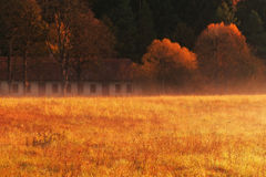 Red grass Royalty Free Stock Image