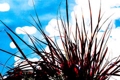 Red Grass Royalty Free Stock Photography
