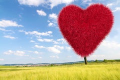 Red grass heart Royalty Free Stock Image