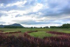 Red Grass Landscape near Mekok River. Stock Photo
