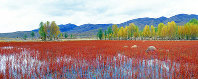 Red grassland panorama Royalty Free Stock Image