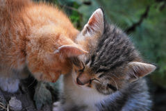Red and gray kittens. Two kittens hugging sleep, green background Stock Photos