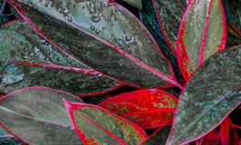 Red and gray leaves generic Stock Photography