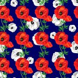 Red,gray poppies on a a dark blue stock illustration